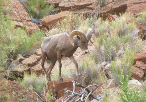 Cute antelope