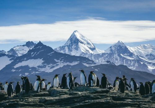Gay Group Trip: Antarctic Express