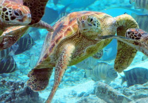 Hotel Le Meridien Bora Bora marine life