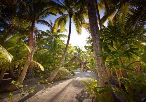 The Brando French Polynesia palms