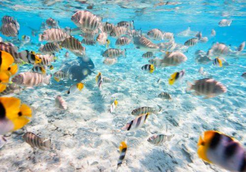 Four Seasons Resort Bora Bora 2