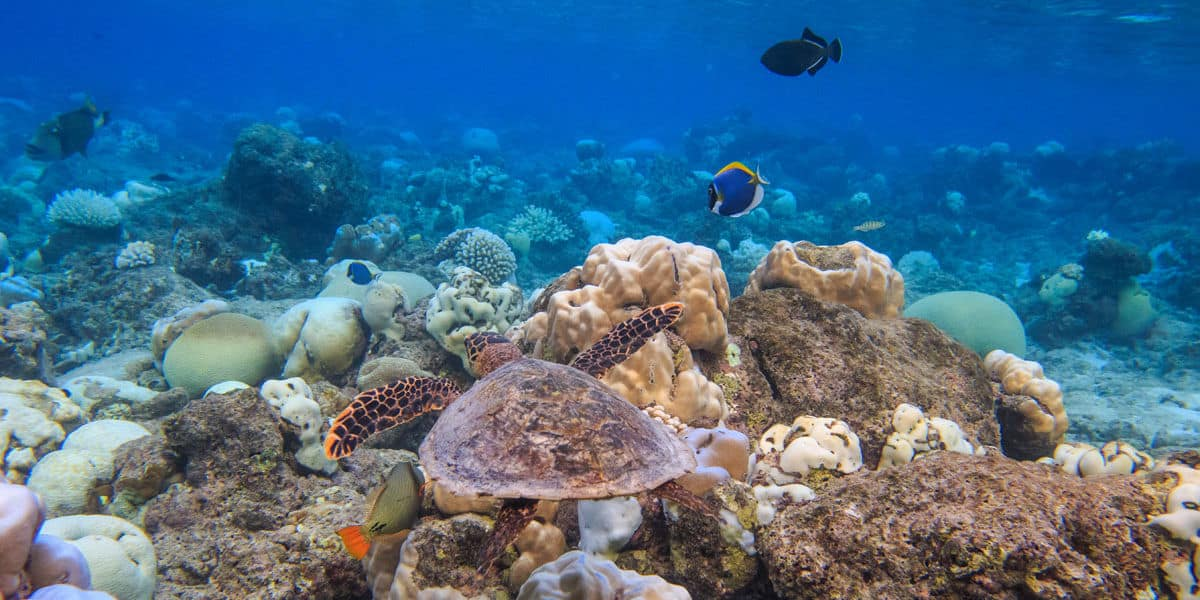 Oblu coral reef