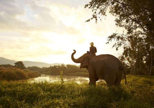 Anantara Elephant Camp Chiang Rai