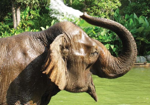 Elephant at Four Seasons Tented Camp Golden Triangle Thailand