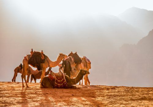 Gay Group Trip: Wadi Rum & Petra