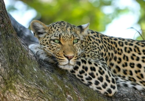 Gay Group Trip: Botswana Luxury Safari