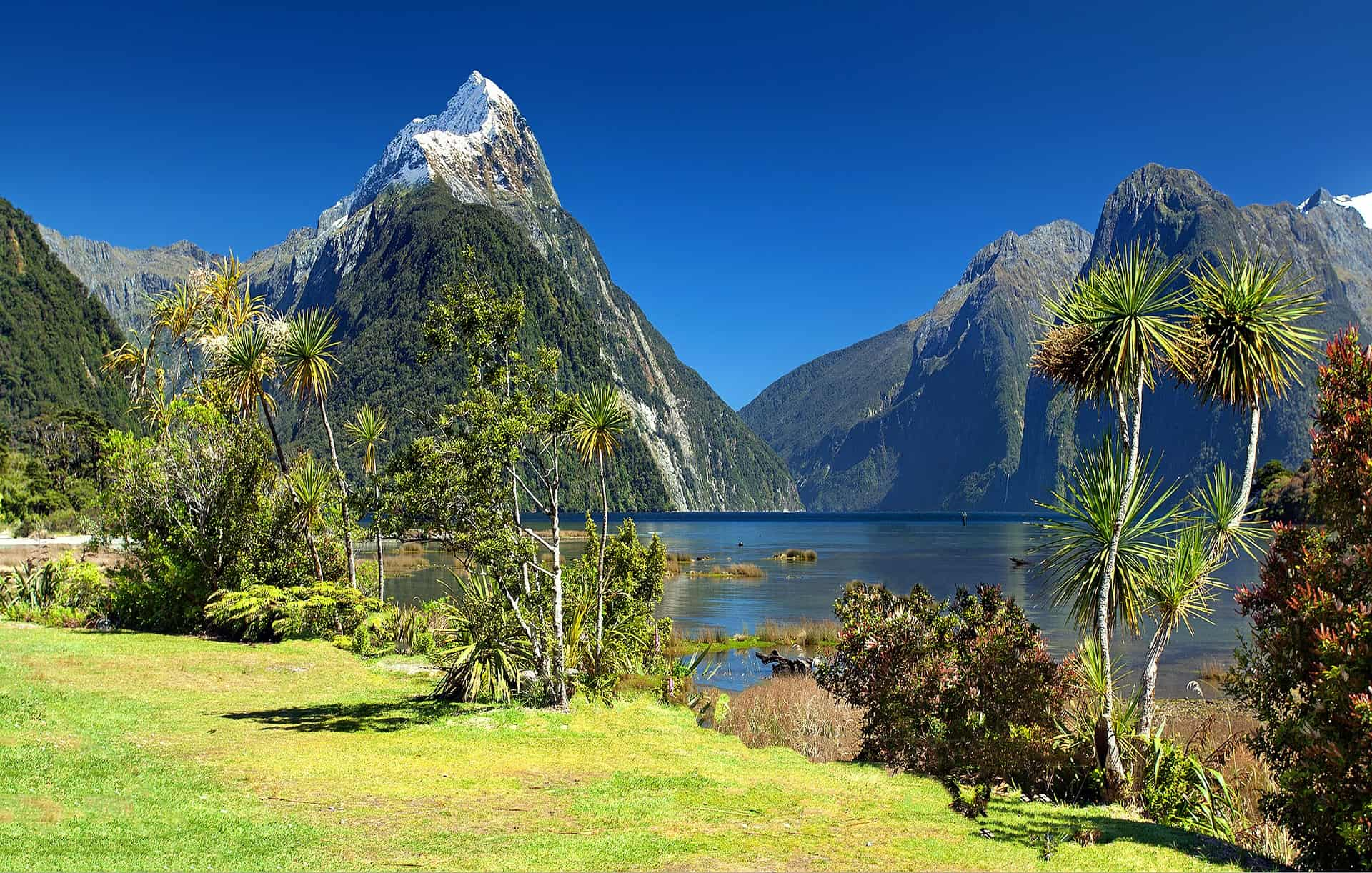 Gay in New Zealand