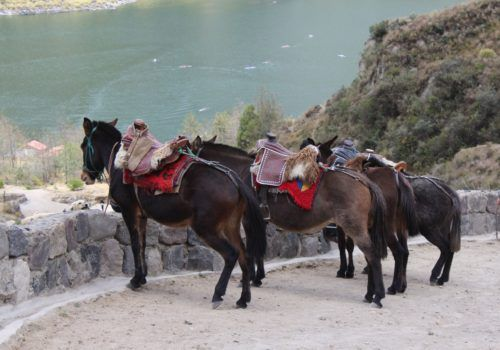 Horses at Quilotoa El Pedregal Ecuador