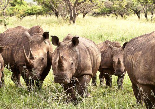 Rhino River Lodge South Africa