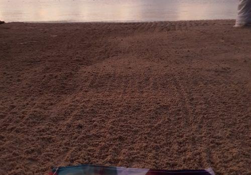 Secrets Akumal beach
