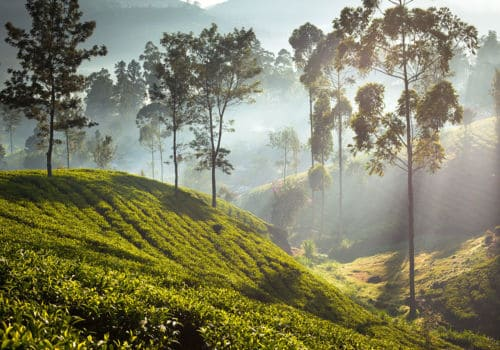 Sri Lanka Heritage and Tea Country