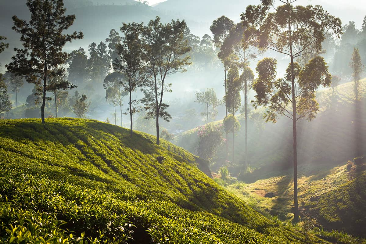Sri Lanka Heritage and Tea Country   Gay Holidays & Vacations   Out