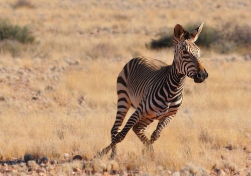 Gay Group Trip: Discover Namibia